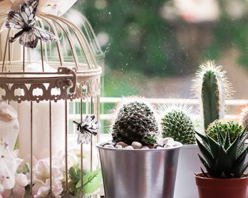 Cactusmania: decorare con le piante grasse!